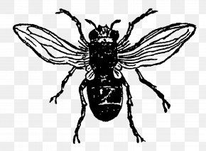 Insect - Insect Honey Bee PNG