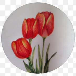 Tulip Painting - Tulip Painting Art PNG