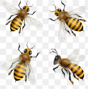 Bee - Honey Bee Euclidean Vector Clip Art PNG