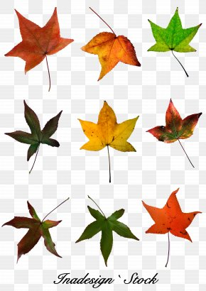 Red Maple Leaf - Red Maple Maple Leaf Autumn Leaf Color PNG
