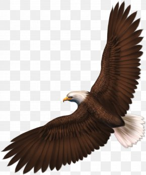 Eagle Image With Transparency Download - Eagle Clip Art PNG