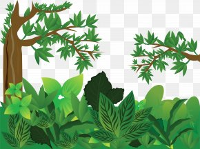 Jungle - Forest Tree PNG