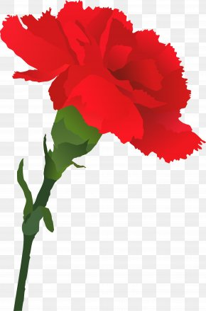 Mother 's Day Carnations - Carnation Royalty-free Clip Art PNG
