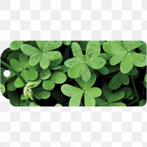 Saint Patrick's Day - Shamrock Four-leaf Clover Saint Patrick's Day Luck PNG