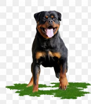 Sporting Group Giant Dog Breed - Cartoon Dog PNG