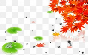 Maple Leaf - Autumn Poster PNG