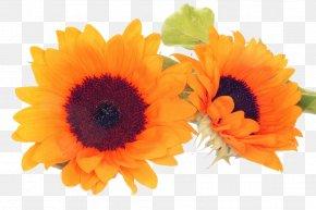 Sunflower - Common Sunflower Petal Cut Flowers PNG