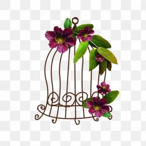 Anthurium Passion Flower - Flower Plant Violet Cut Flowers Magenta PNG