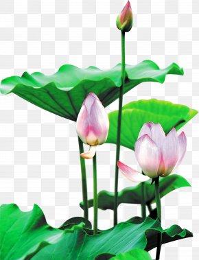 Lotus Buckle Creative HD Free - Ho Chi Minh City Bac Giang Province Kon Tum Province Sanxing Calligraphy PNG