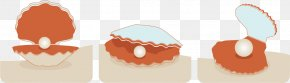 Vector Shell - Seashell Download Euclidean Vector PNG