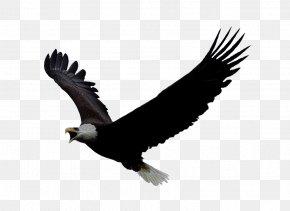 Eagle Image Download - Eagle Flight PlayStation 4 Bald Eagle Oculus Rift PNG
