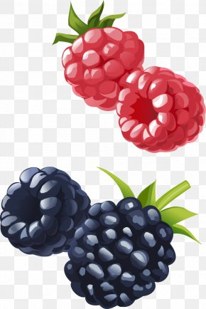 Vector Hand-painted Raspberries And Blueberries - Frutti Di Bosco Boysenberry Raspberry Blueberry Fruit PNG