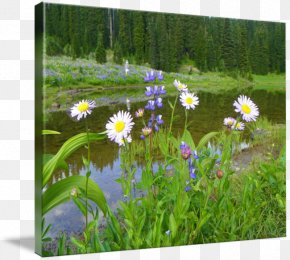 National Day Decoration Design Exquisite - Mount Rainier Wildflower Flora Meadow Gallery Wrap PNG