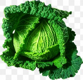 Cabbage - Savoy Cabbage Cauliflower Brussels Sprout Broccoli PNG
