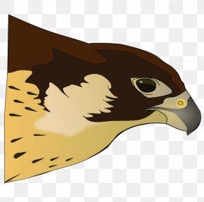 Tomahawk Clipart - Bird Of Prey Hawk Clip Art PNG