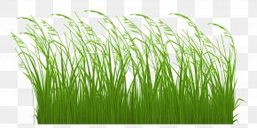 Free Grass Cliparts - Grasses Free Content Stock Illustration Clip Art PNG