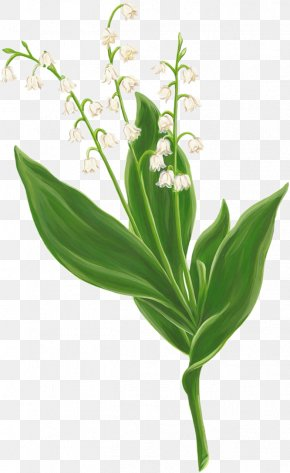 Lily Of The Valley - Lily Of The Valley Digital Image Clip Art PNG