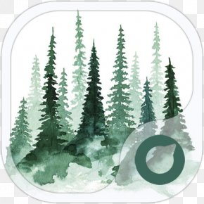Tree - Study Of A Tree Pine Watercolor Painting PNG