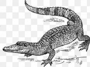 Alligator Swamp Cliparts - Crocodile Alligator Black And White Clip Art PNG