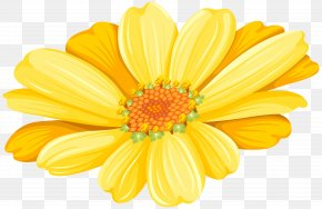 Yellow Daisy Transparent Clip Art Image - Transvaal Daisy Chrysanthemum Argyranthemum Frutescens Floristry Common Sunflower PNG