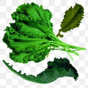 Physical Green Organic Cabbage - Spring Greens Cabbage Organic Food Kale PNG