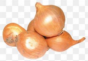 Onion - Yellow Onion Shallot Vegetable PNG