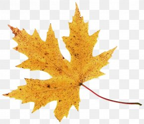 Autumn Leaf Image - 2017 Nissan LEAF Autumn Leaf Color Clip Art PNG