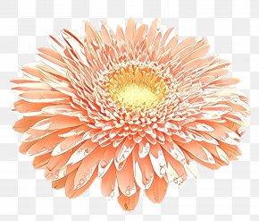 Cut Flowers Plant - Orange PNG