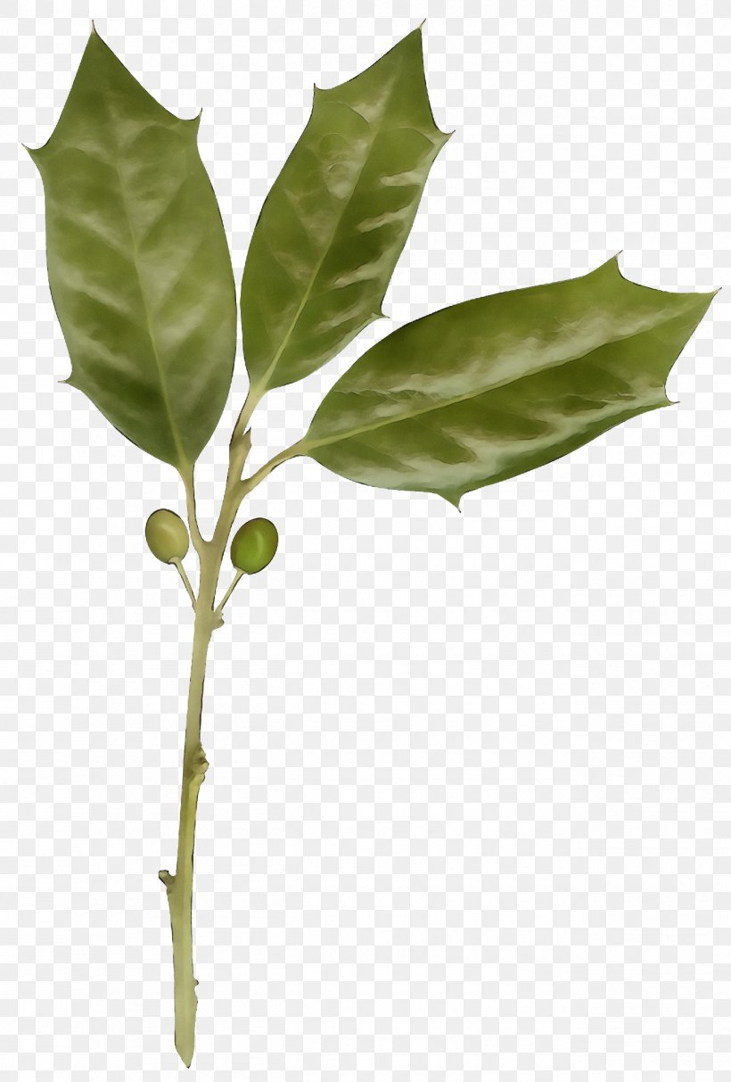 Leaf Plant Flower Tree Plant Stem Png 1300x1924px Christmas