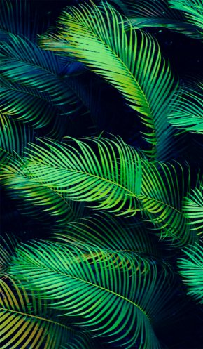 Banana Leaves - Arecaceae Leaf Palm Branch Tropics Wallpaper PNG