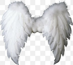 Wings - Wing Angel Clip Art PNG