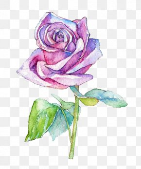 Watercolor Flowers - Watercolor Painting Garden Roses Centifolia Roses Illustration PNG