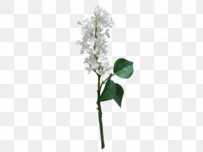 Lilac Flower - Artificial Flower Flower Bouquet Cut Flowers Wedding PNG