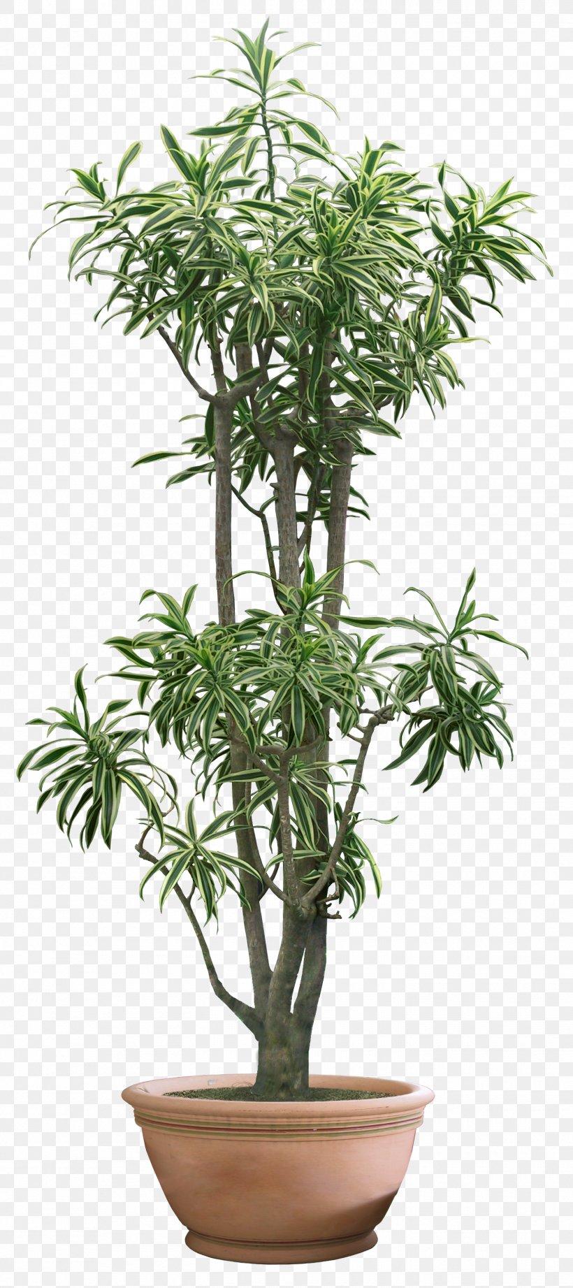 Tree Bamboo Houseplant Bonsai Penjing Png 1450x3260px Tree Bamboo Bonsai Chamaedorea Elegans Cycad Download Free