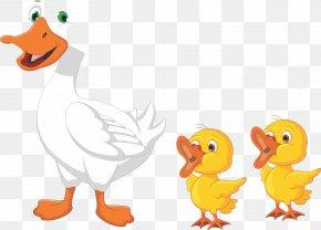 Duck - Duck Drawing Cartoon Goose PNG