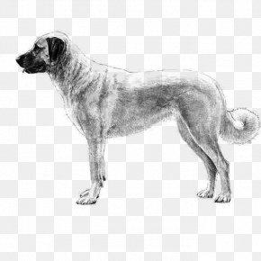 Giant Dog Breed English Mastiff - Dog Drawing PNG