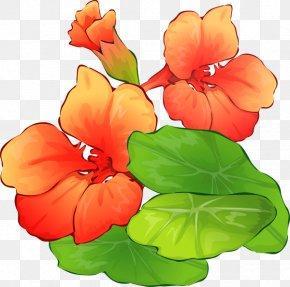 Nasturtium Flower Cliparts - Flower Free Content Clip Art PNG