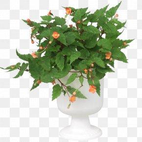 Flower In Pot - Clip Art Image Download Design Drawing PNG