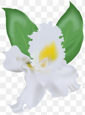 White Orchid Clip Art Image - Image File Formats Lossless Compression PNG