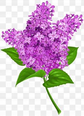 Lilac Transparent Clip Art Image - Lilac Clip Art PNG