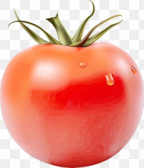 Bush Tomato Vegetarian Food - Tomato Cartoon PNG
