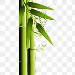 Green Bamboo Vector - Bamboo Charcoal Activated Carbon Air Purifier PNG