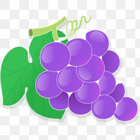 Purple Grapes Cartoon - Grape Cartoon Drawing PNG