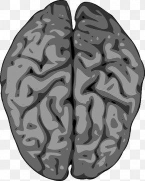 Human Brain Clipart - Human Brain Clip Art PNG