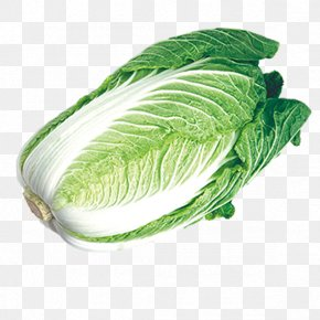 Chinese Cabbage,vegetables - Chinese Cabbage Napa Cabbage Umami Vegetable PNG