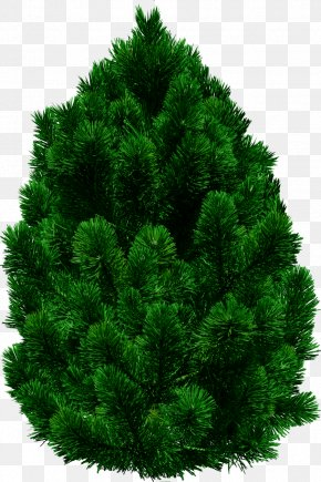 Tree Image - Tree Populus Nigra PNG