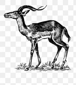 Markhor Clip Art - Chevrolet Impala Antelope Drawing Clip Art PNG