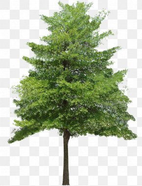 Christmas Trees Png.Christmas Trees Images Christmas Trees Png Free Download