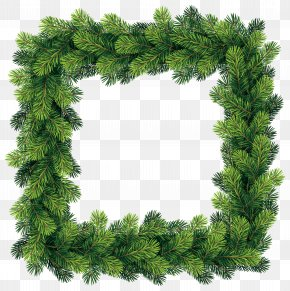 Transparent Pine Border Frame Clip Art Image - Christmas Tree Pine Clip Art PNG
