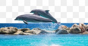 Dolphin - Dolphin Shutter Speed Pixabay PNG